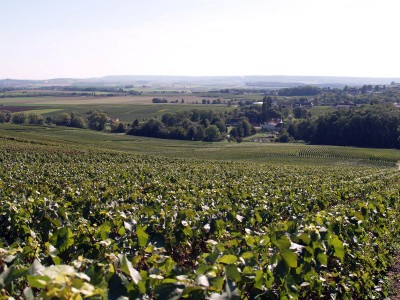 Coulommes-la-Montagne vineyard, 51390 Marne