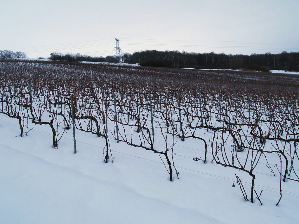 Vineyards under snow in winter