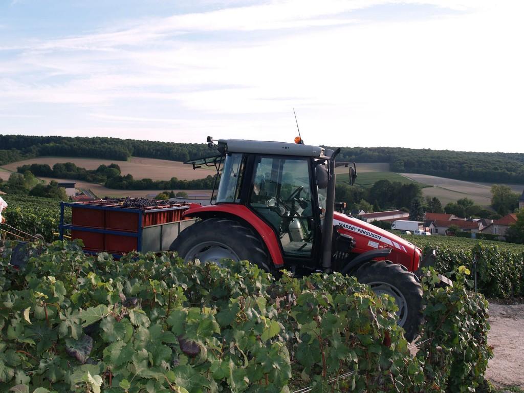 Tracteur dans les vignes transportant des bacs remplis de raisin