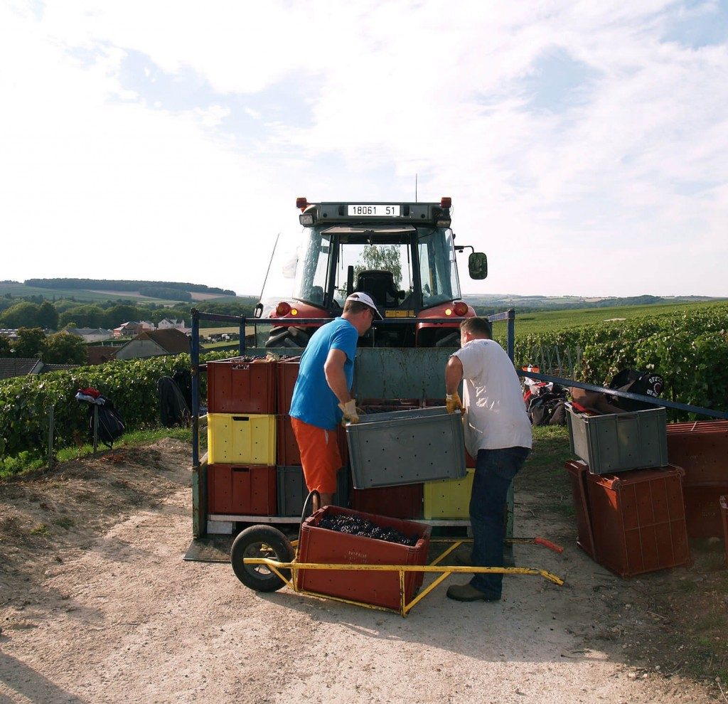 Load of boxes filled with the harvest of grapes on the platform behind the tractor