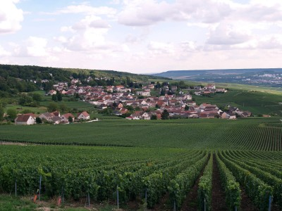 Champillon vineyard, 51160 Marne