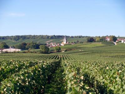 Vignoble de Ville-Dommange, 51390 marne