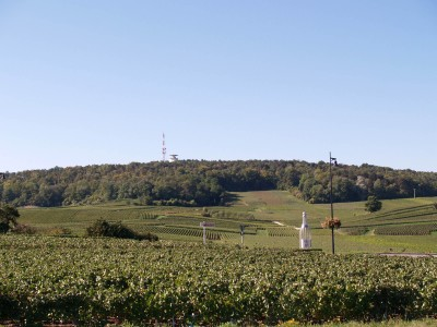 Vrigny vineyard, 51390 Marne