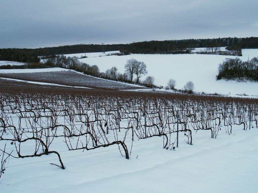 Vineyards under snow in winter